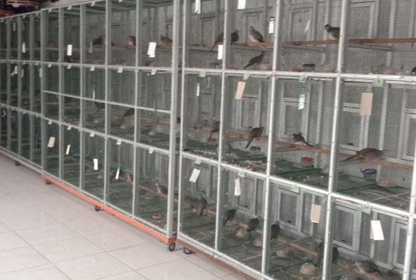 AD Bf klaten Jateng Memasuki 2021 tetap eksis
